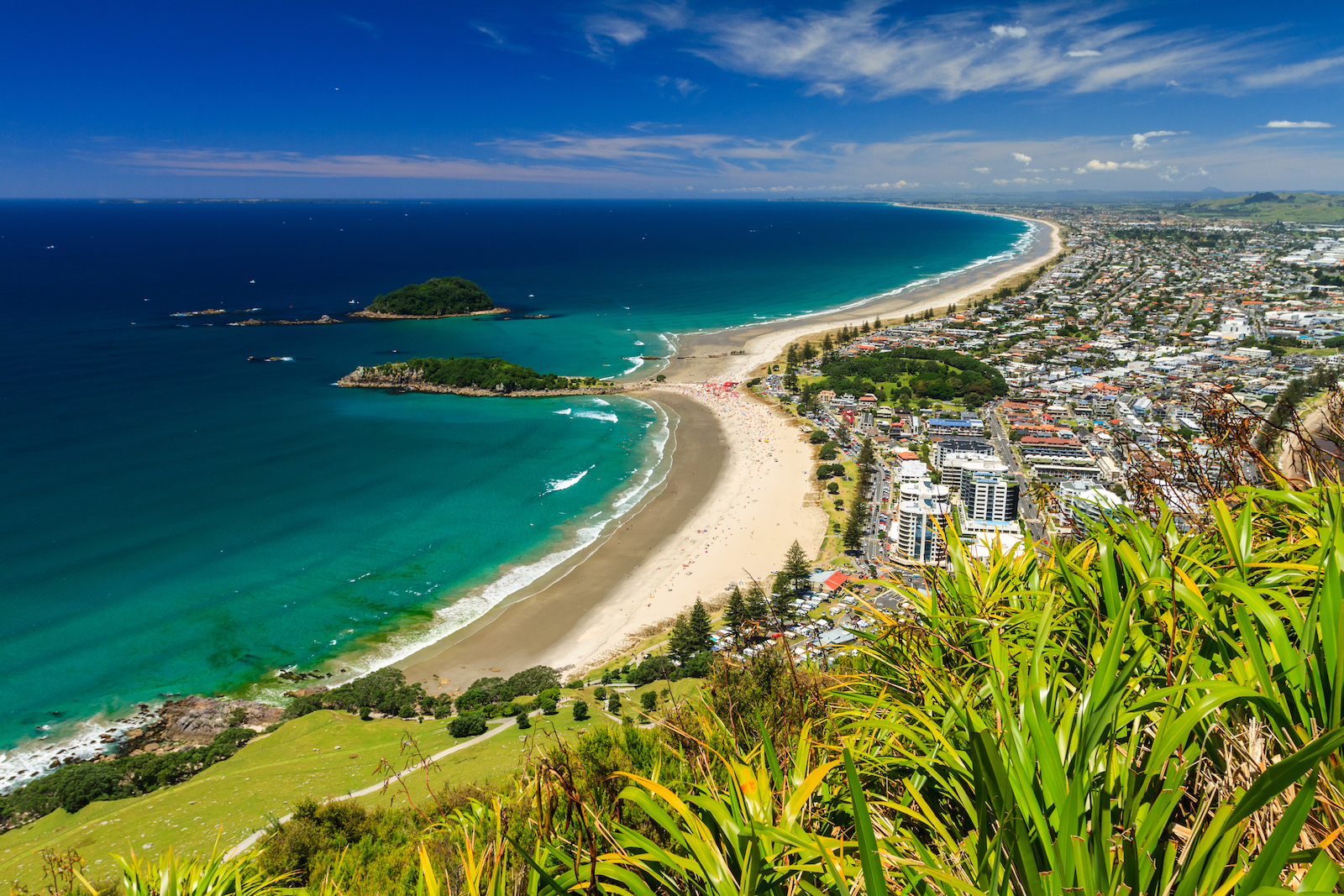 Beach and township views from the top of a hill in Tauranga, New Zealand
