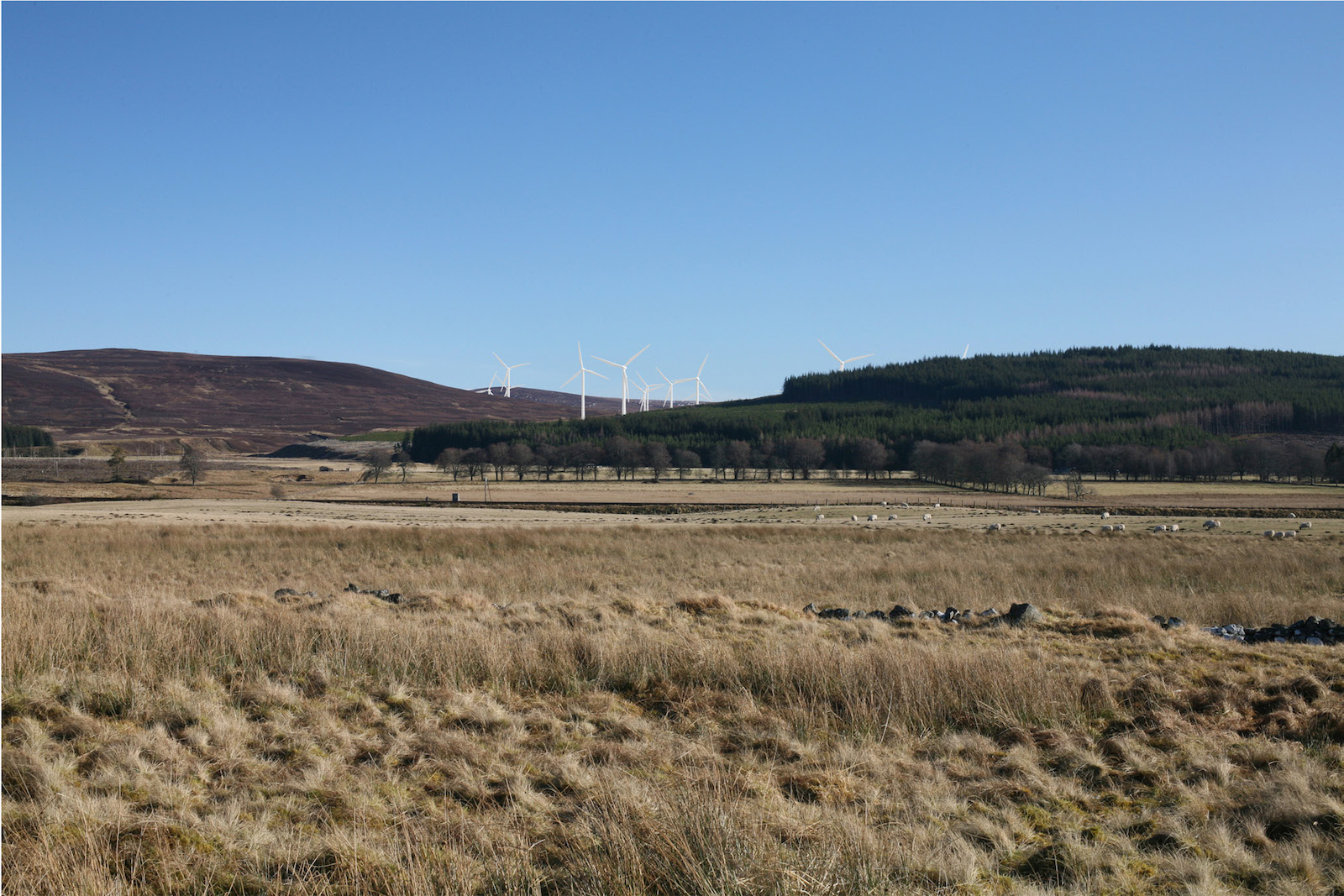 Moy wind farm - project image.jpg