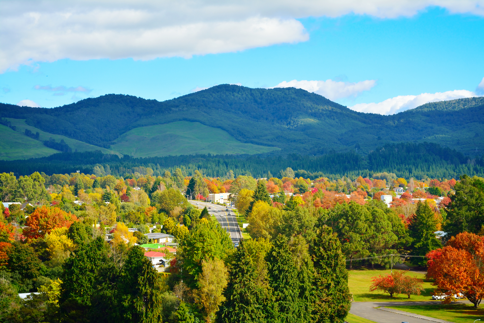 Trees and mountains in Turangi, New Zealand