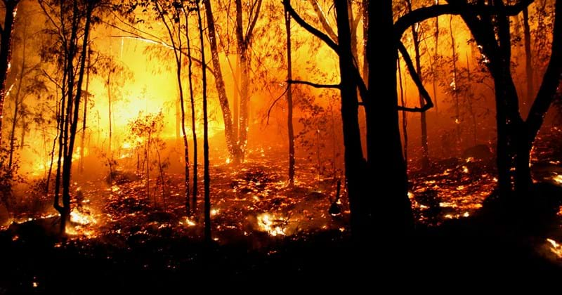 Bushfire spreading throughout a forest in the evening lighting the trees up in yellow and orange.