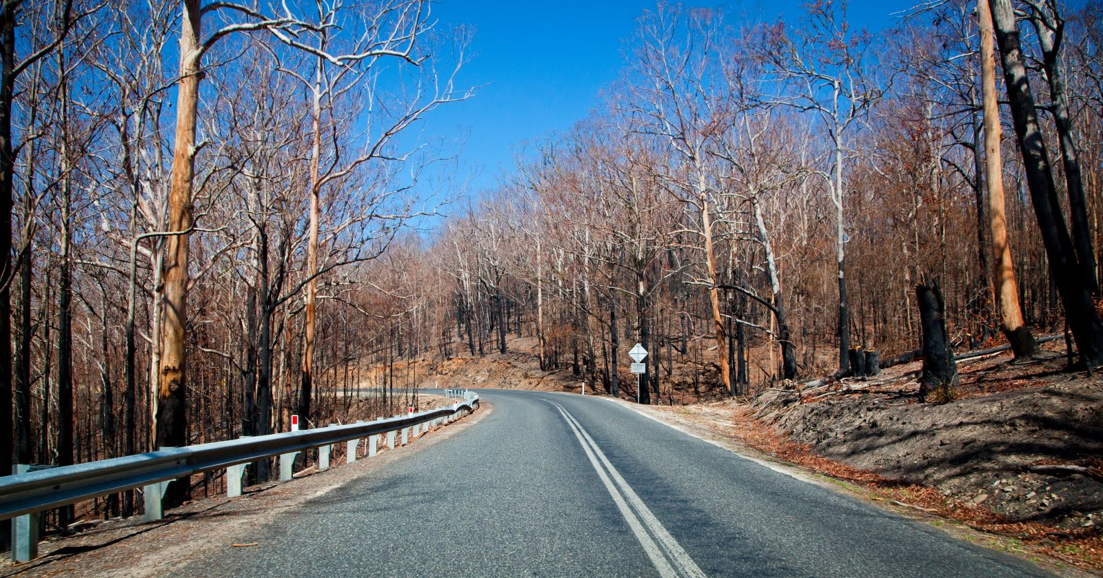 Firebreak motorway in Australia surrounded by burnt trees