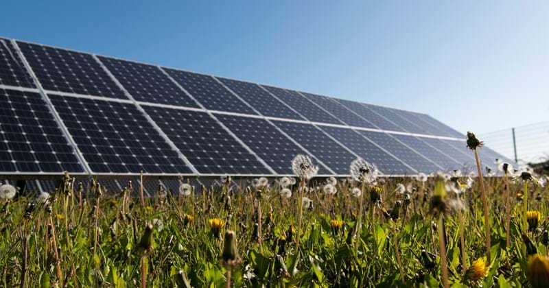 Solar Farm Renewable.jpg